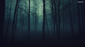 night-forest-trees-in-the-at-389831