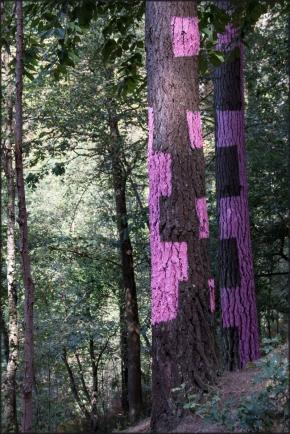 Bosque pintado Oma