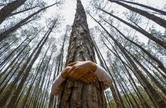 pc-140605-nepal-tree-hugging-mn-730_9424a42d6b3396d0c513915cb6c86abf