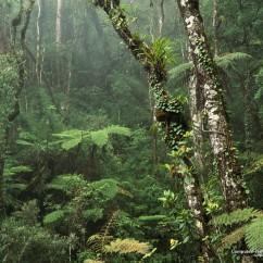 montane-rainforest-mount-kinabalu-national-park-borneo1