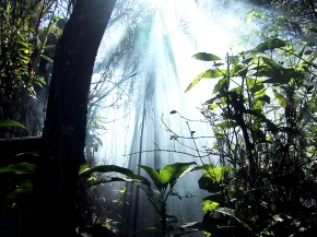 Sinharaja-Forest-Reserve-is-a-national-park-in-Srilanka