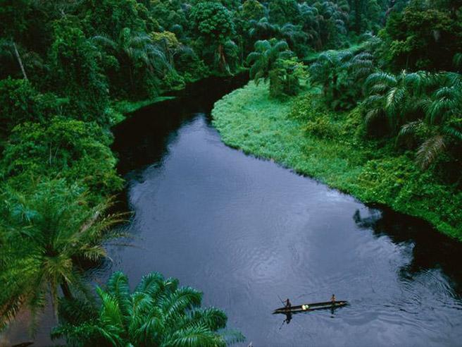 THE CONGO RAINFOREST