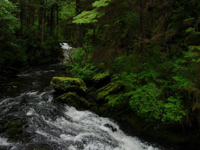 Tongass_National_Forest_3