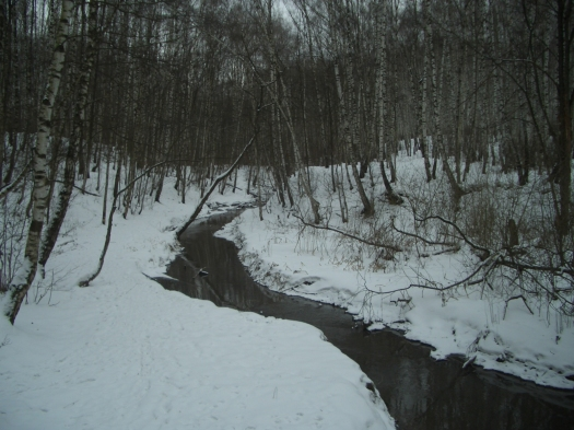 Bitsa_River_in_Yasenevo_Forest_Park