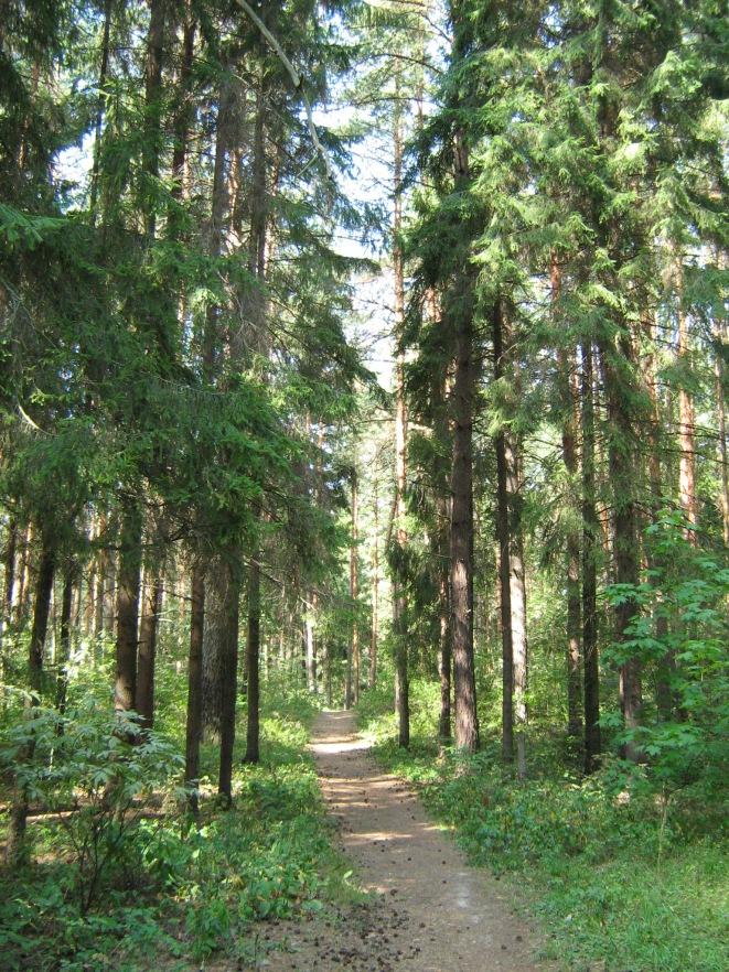 C0388-Kstovo-Zelyony-Gorod-Trail