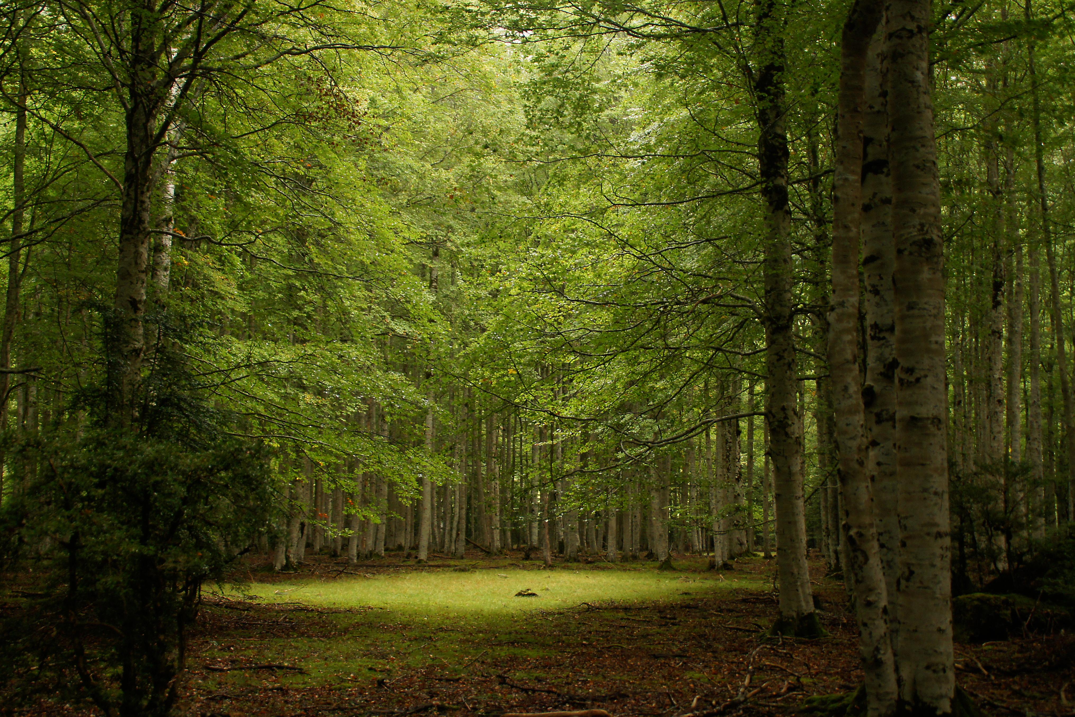 Cuidado y conservación de nuestros bosques: Día Internacional de los Bosques y la iniciativa Bosques de Galicia