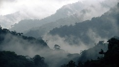 Costa_Rica_Cloud_Forest_Reserve_Montevideo_Wallpaper_1920x1080