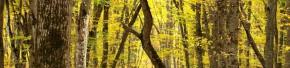 cropped-stavropol-pine-forest.jpg