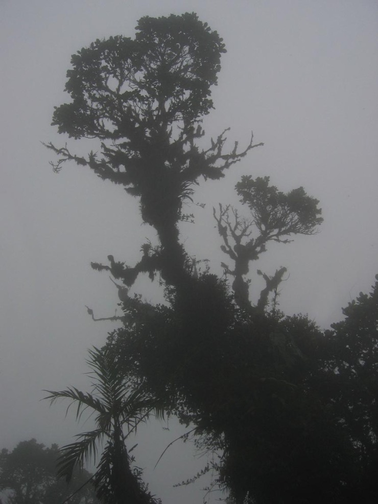"""""""DirkvdM cloudforest"""". Licensed under CC BY-SA 3.0 via Wikimedia Commons - http://commons.wikimedia.org/wiki/File:DirkvdM_cloudforest.jpg#/media/File:DirkvdM_cloudforest.jpg"""