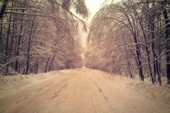 Genko Forest Belt