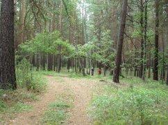 Karakan Pine Forest