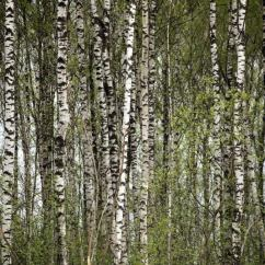 Khimki Forest