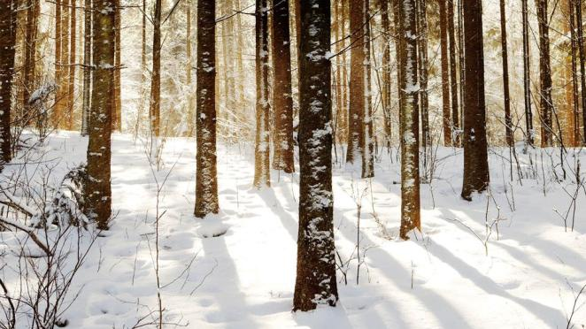 Romincka Forest