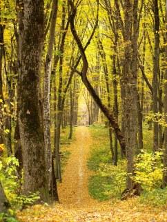 Stavropol Pine Forest