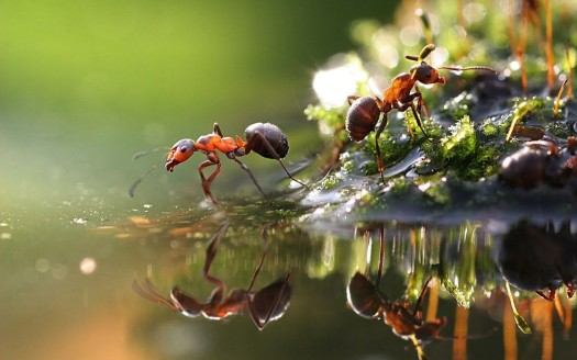 Ant-Species-Macro-Wallpaper-HD1