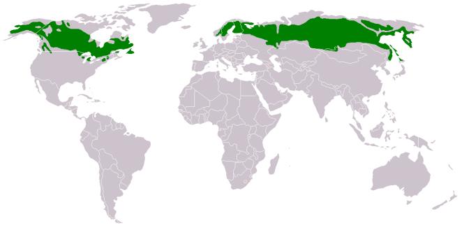 Distribución-territorial-de-la-taiga