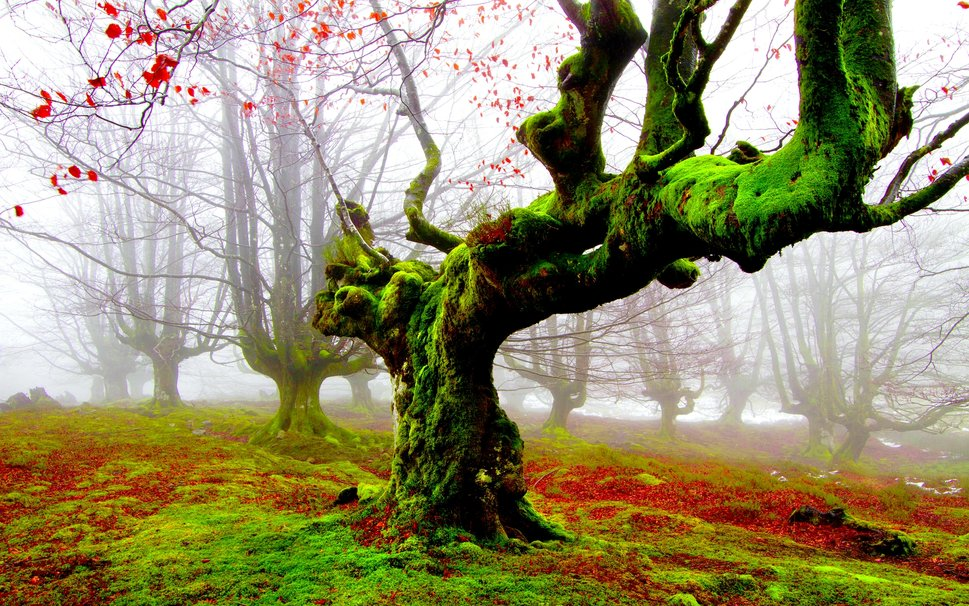 319458__forest-of-fog-and-moss_p