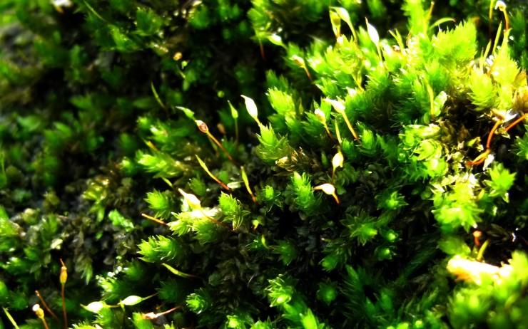 6797381-green-macro-background