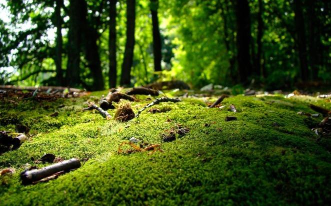 6856206-forest-moss