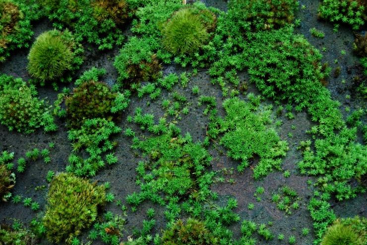 Moss-Rocks-acro-spreading