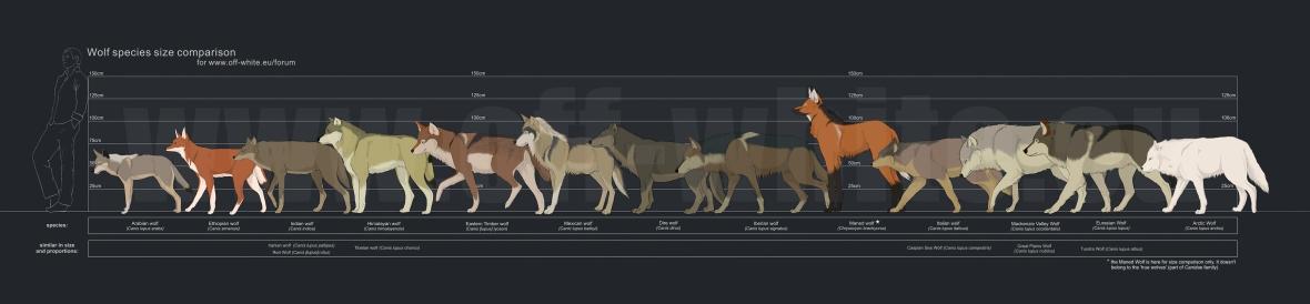 tanathe_at_deviantART_wolfcomparison