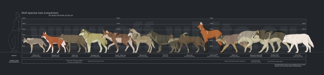 tanathe_at_deviantART_wolfcomparison