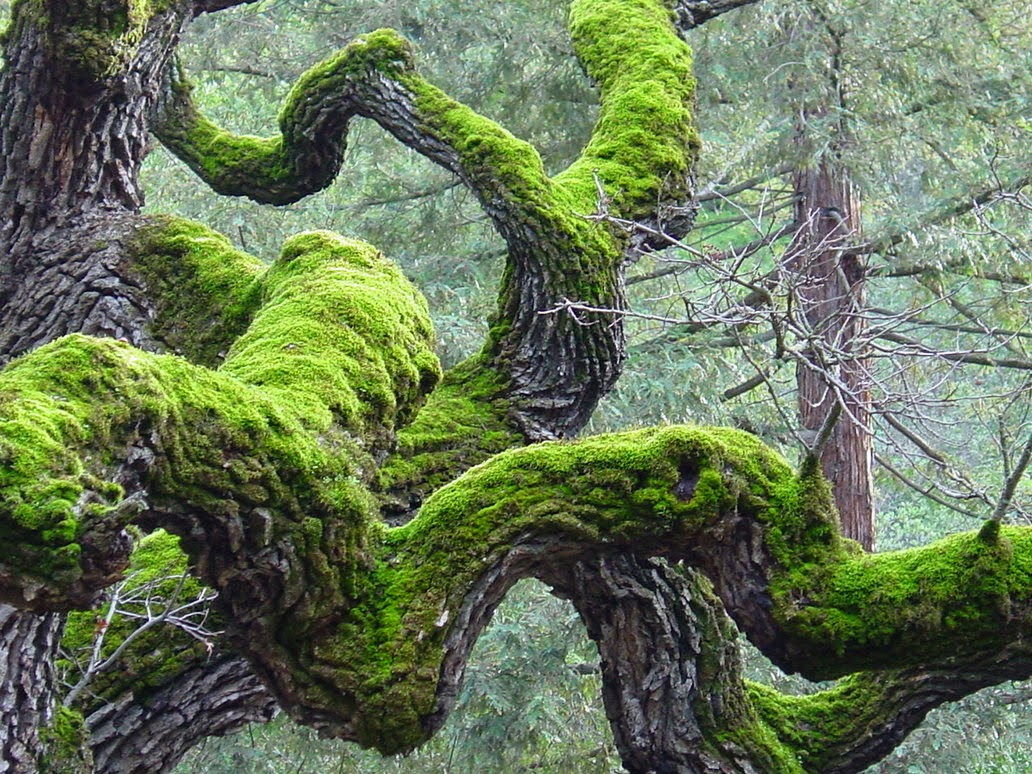 Twisted_Tree_and_moss_by_dantecosplayer