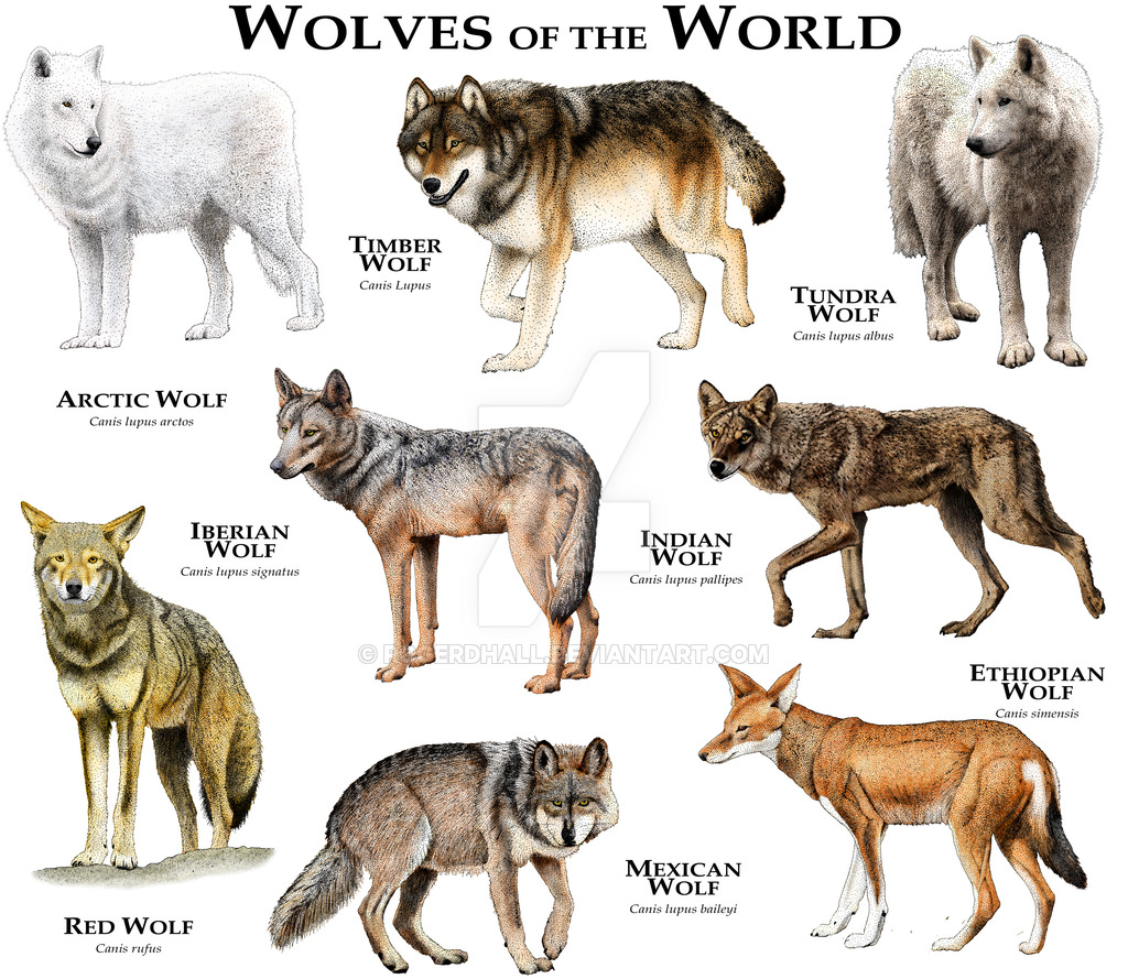 wolves_of_the_world_by_rogerdhall-d8tqbqg