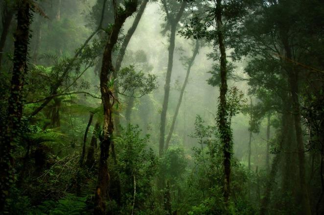 24-David-Lazar-Deep-Forest