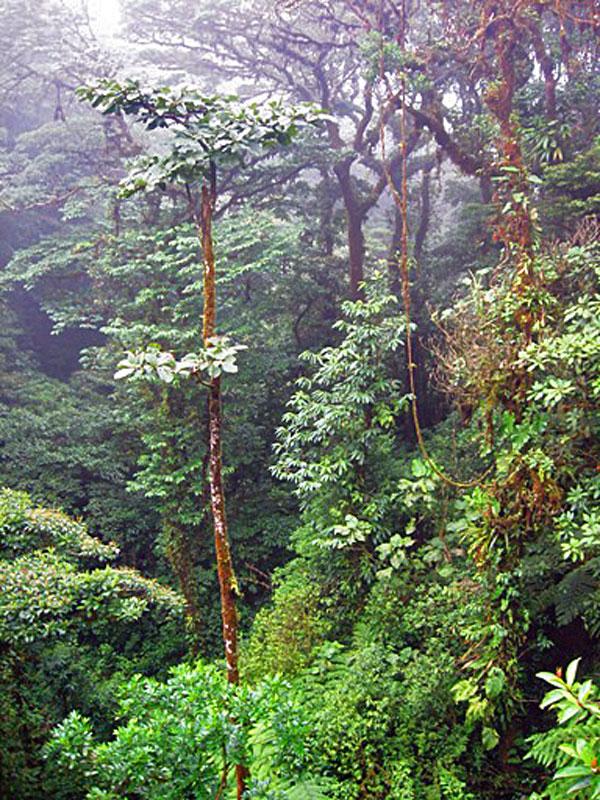 monteverde-reserve