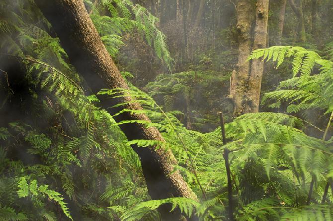 bosque-encantado-la-palma