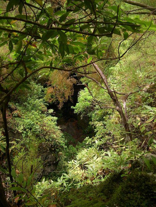forest_los_tilos_la_palma