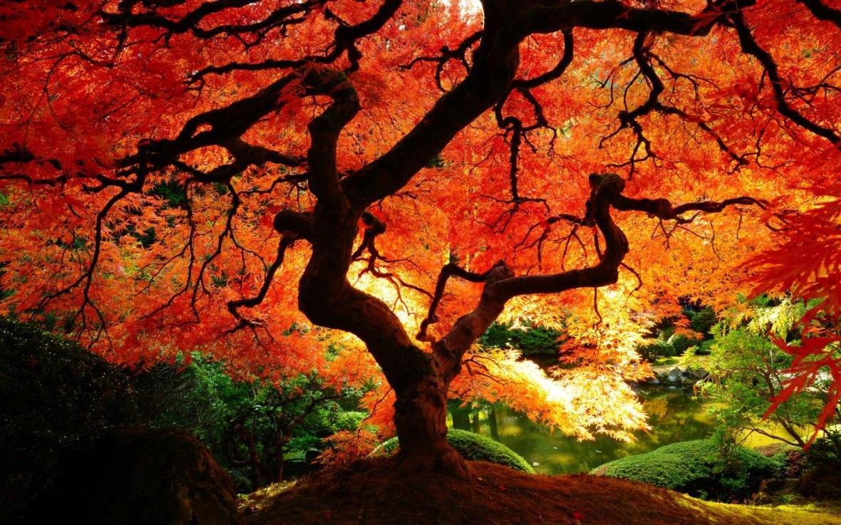 orange-tree-of-life