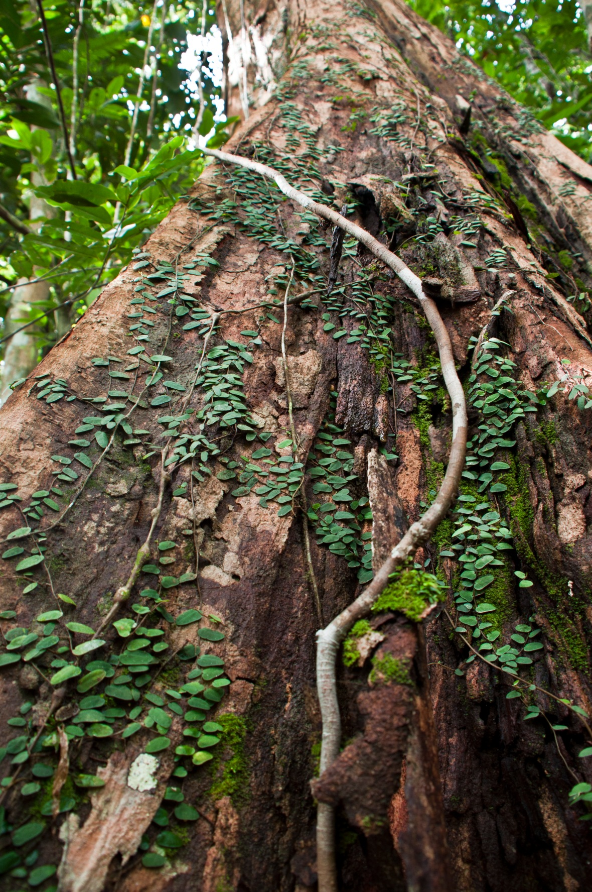 tree-full-of-life