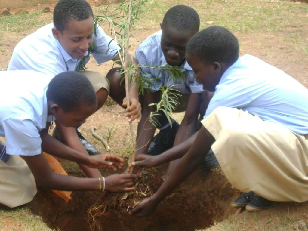 UYSTO planting trees