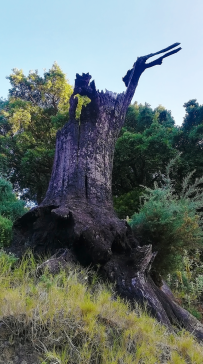eco reserva ojen flora