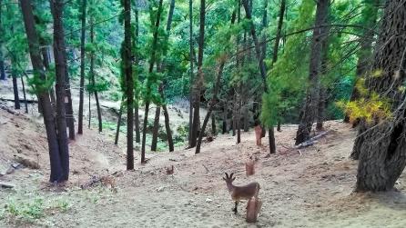 eco reserva ojen fauna